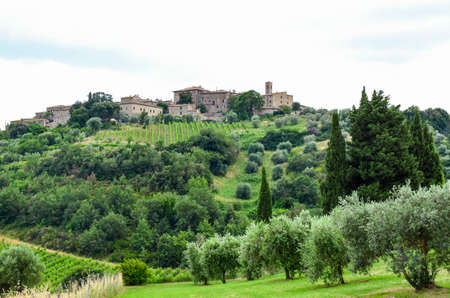 Olive trees, grape field and old buildings on the hill. Italy, Tuscany. 스톡 콘텐츠