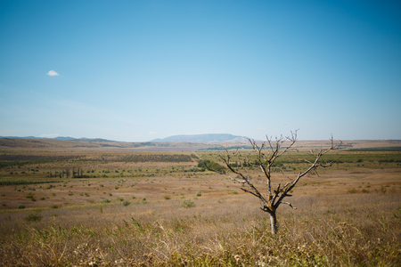 Desert wild nature with tree and mountains in the distance in hot summer season