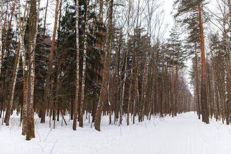 snowy field: Photo of beautiful forest landscape