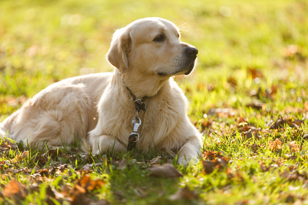 Dog in collar on lawn Stock Photo