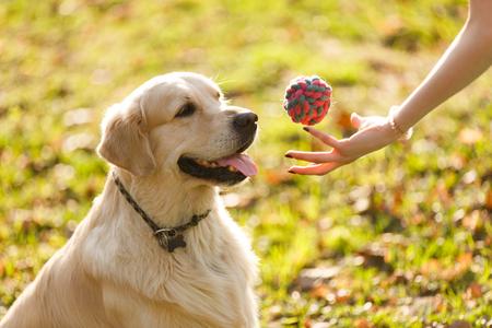Woman giving ball to retriever