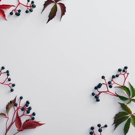 Autumn minimal composition - Vine red and green leaves background. Modern minimalistic brochure with black vine on white background. Floral wallpaper. Autumn botanical concept. Flat lay.