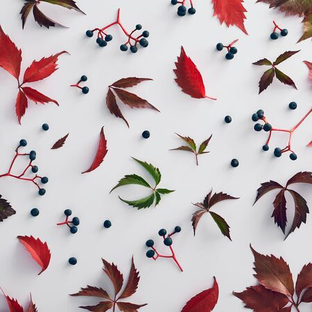 Vine red and green leaves background. Banner, poster template. Green and red ivy on white background. Floral frame christmas background. Creative design templates. Flat lay.