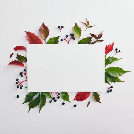Seasonal minimal composition - Vine red and green leaves background with white copy space. Fall fashion mockup. Autumn botanical concept. Floral card nature. Autumn minimal design. Flat lay.