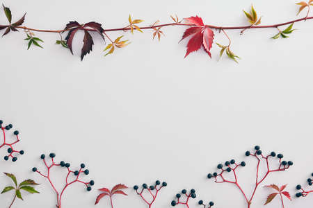 Empty floral frame with black elderberry branches. Elderflower berries on twigs composition isolated on white background. Decorative border with sambucus and leaves. Fall harvesting season concept
