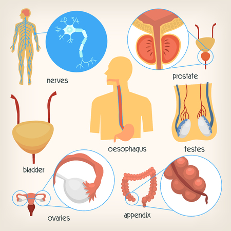 Set of images of main human body organs. Accurate illustrations with names. Isolated vector images for medical infographics and posters