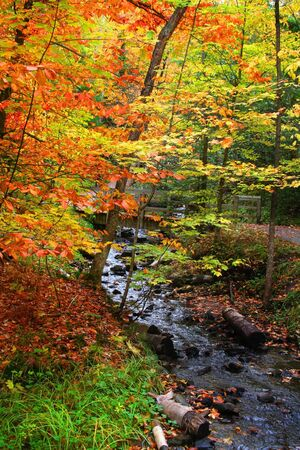 Stream passing through colorful trees photo