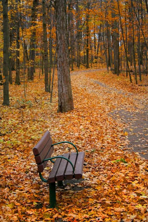 treed: single bench in a park during autumn time