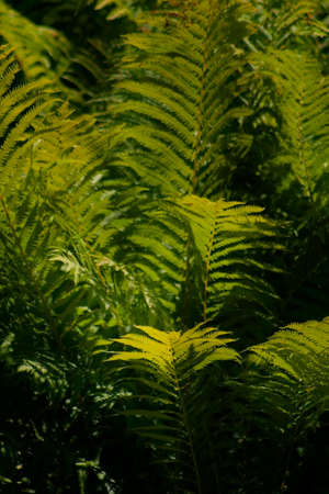 Fern leaves good for background kind of use