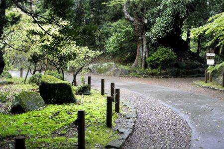 Lush green Japanese garden during rainy day
