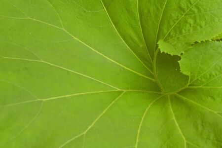 Large green leaf close up shot good for background use Stockfoto