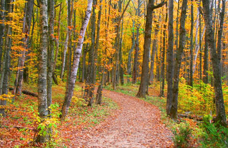 Scenic autumn walk way in michigan upper peninsula photo