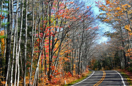 Scenic drive through autumn trees at the end of autumn time photo