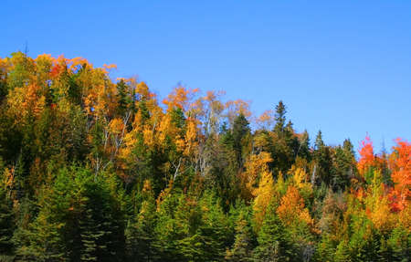 autumn trees with blue sky background in michigan Stock Photo - 1557500