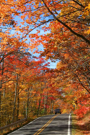 Road through red and orange colored trees in autumn season Stock Photo - 1649959