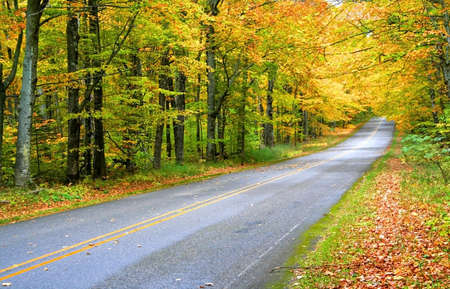 Road through colorful trees during early autumn time photo