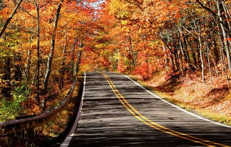 drive through: scenic drive through woods autumn time in michigan