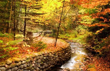 Beautiful fall scene in a Michigan state park