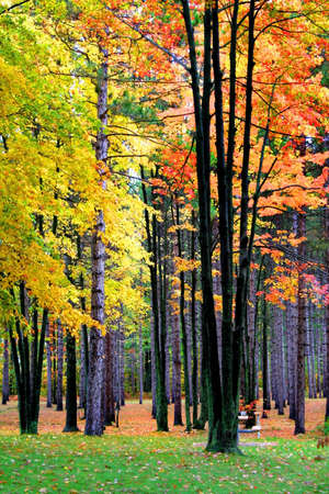 fallcolours: Bright colorful trees in a park during autumn time  Stock Photo