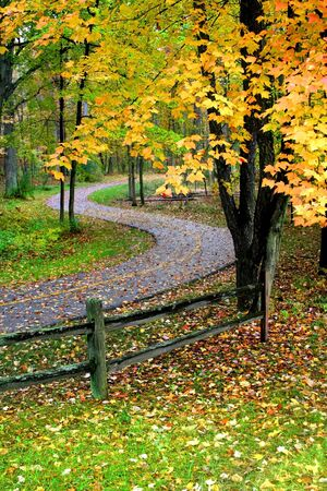 yellow coloured autumn leaves and trees in a park Stock Photo