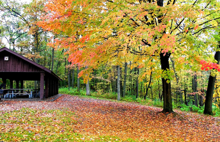 Beautiful colorful trees in a park during autumn time photo