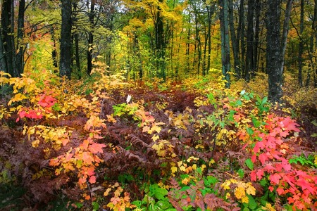 Bright colored trees in a forest during autumn time  photo