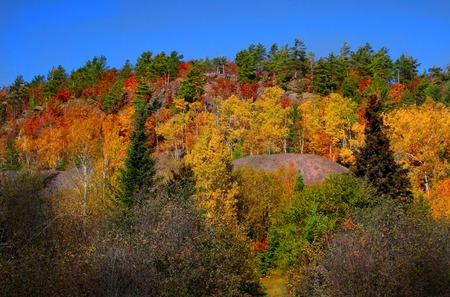 colorful trees on a hill at copper harbor area Stock Photo - 1667417
