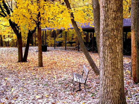 Colourful Autumn trees in a park in michigan   photo