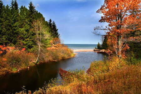 colorful trees by the small pond in a forest photo