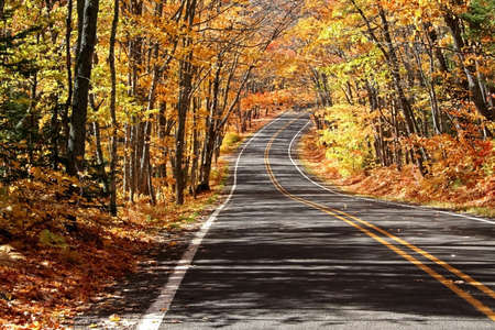 Road Through Maple Trees photo