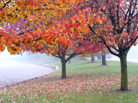 Foggy Autumn photo