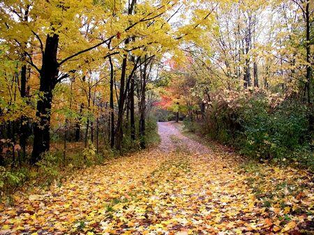 Colourful Autumn drive in michigan upper peninsula photo