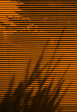Blinds and tree shadow in the evening time  Stock Photo