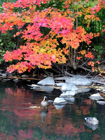 AUTUMN SCENE NEAR LAKE  SHORE photo