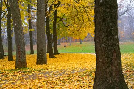 fallcolours: autumn trees in a park in michigan-Leaves turned in to yellow