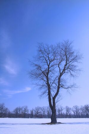 Single tree with sky background in winter weather Stock Photo - 1735901
