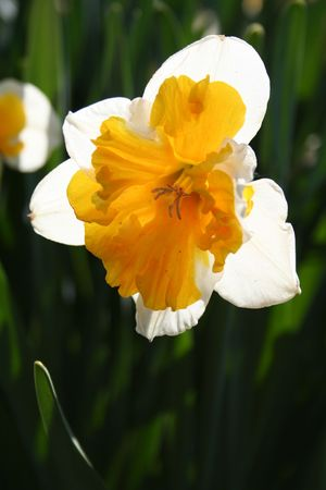 white and yellow  flower with green back ground