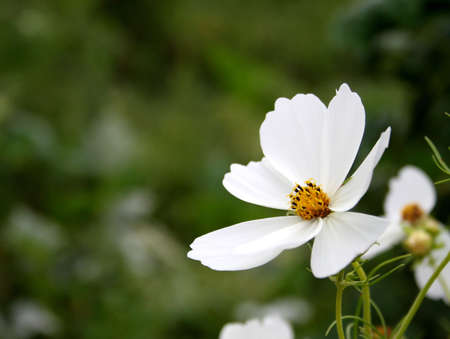 white flower with green back ground in spring time