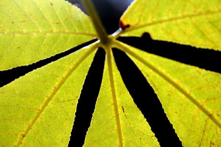 colord: Close up view bright green colord leaf  Stock Photo