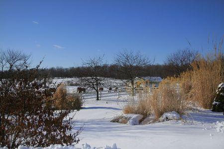 michigan snow: winter scene in michigan