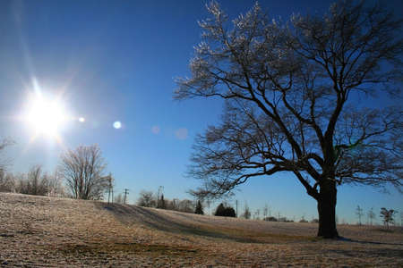 bright sun during winter time and ice covered tree photo
