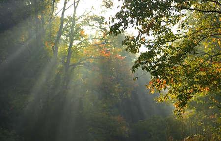 Morning sun light rays photo