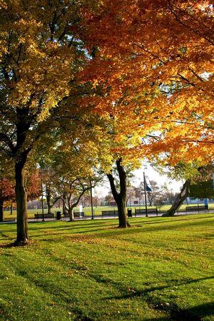 fallcolours: Fall Trees