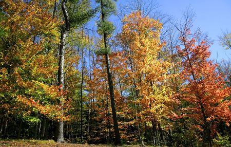 fallcolours: Autumn Scene