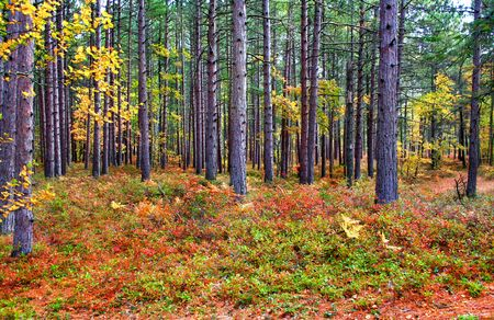 fallcolours: autumn trees in a park in michigan Stock Photo