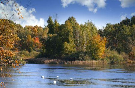 near side: Autumn Trees Near Lake Side
