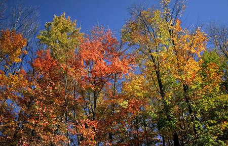 Autumn Scene  Stock Photo - 2084227