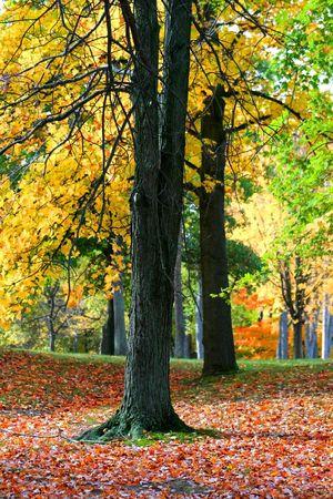 fallcolours: Autumn Park