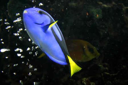 Blue Fish Stock Photo - 2127709