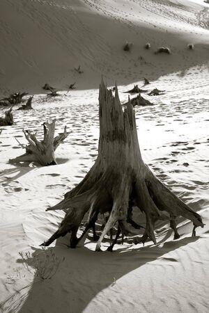 shoeprint: Dead Trees In The Desert